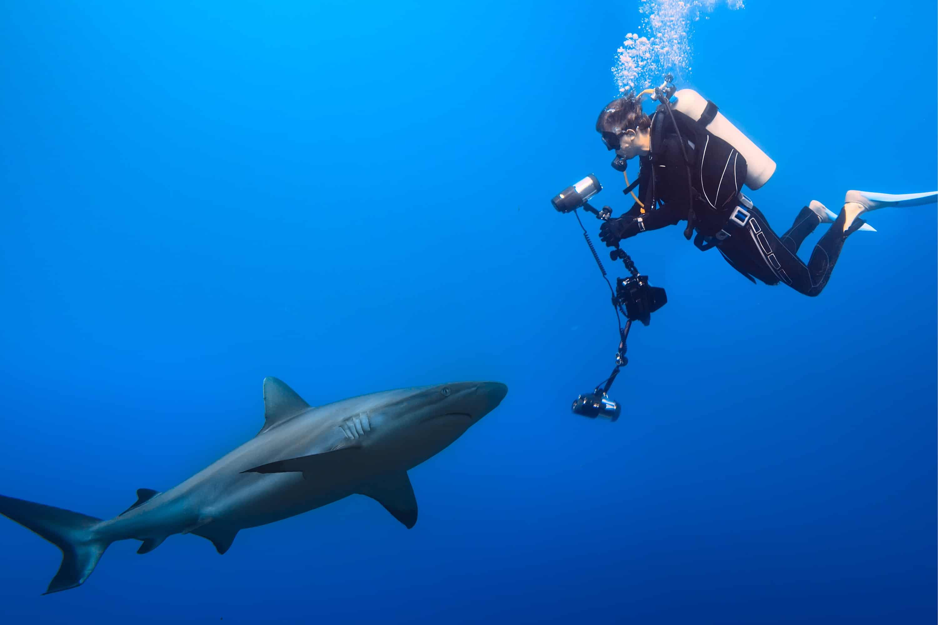 cybersecurity risk assessment diver shark